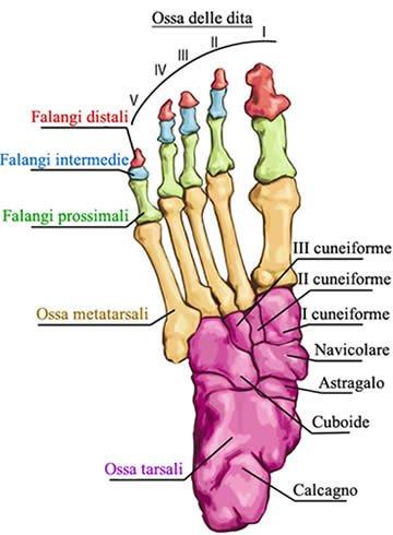 Metatarsalgia: cure e rimedi naturali 1